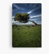 Windswept Canvas Print