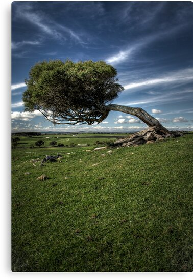 Windswept by SD Smart