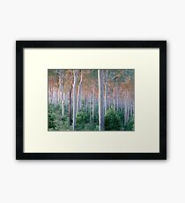 Sunrise Spotted Gum Forest Mystery Bay Framed Print