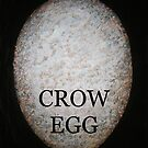 CROW EGG by Glenda Jones