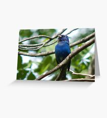 Blue Beauty- Indigo Bunting Greeting Card