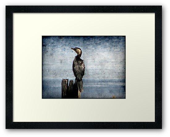 Bird Watching by Kitsmumma