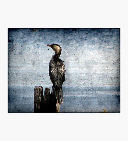 Bird Watching Photographic Print