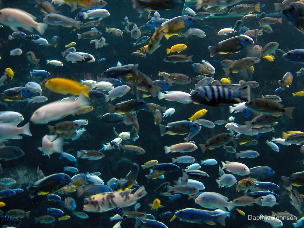 Fishy Diversity by Daphne Johnson