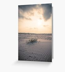 Life in the desert (Terschelling) Greeting Card