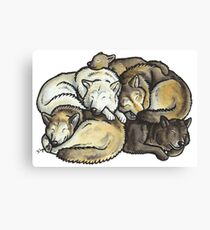 Sleeping pile of grey wolves Canvas Print