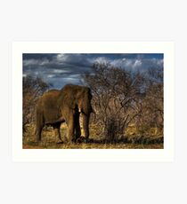 HDRI Elephant Scene Art Print