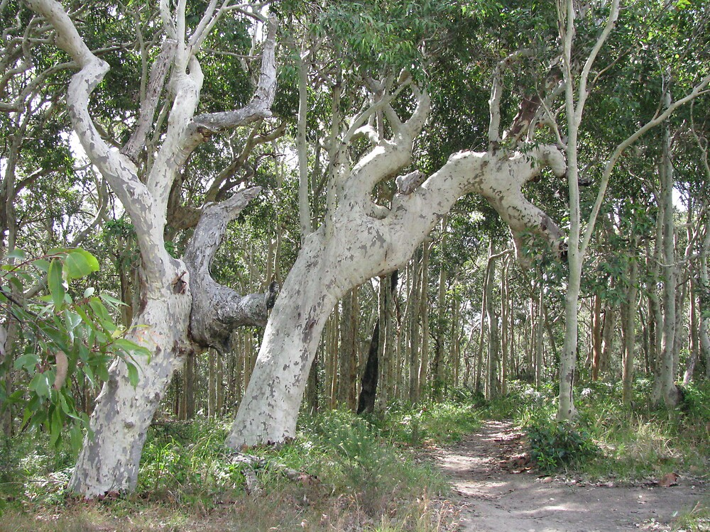 Gnarly Trees by Sue Wickes
