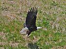 Eagle Take-off by Graeme  Hyde