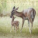 New Born Fawn by Penny Odom