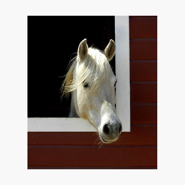Horse in barn Photographic Print