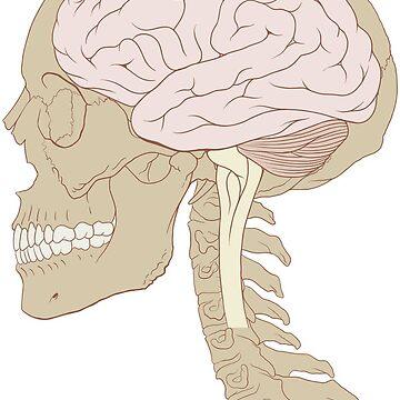 Human brain by Yellowgalaxies