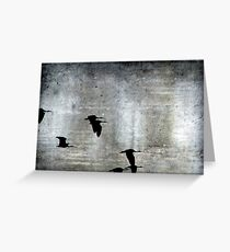 Fly by Night Greeting Card