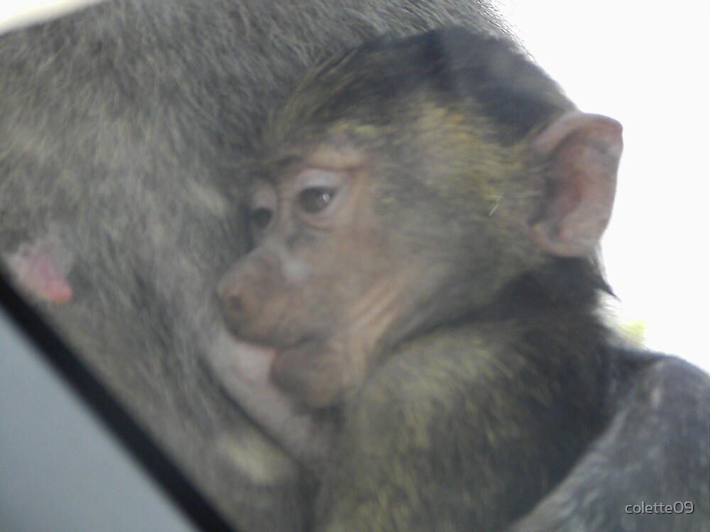 baby monkey by colette09