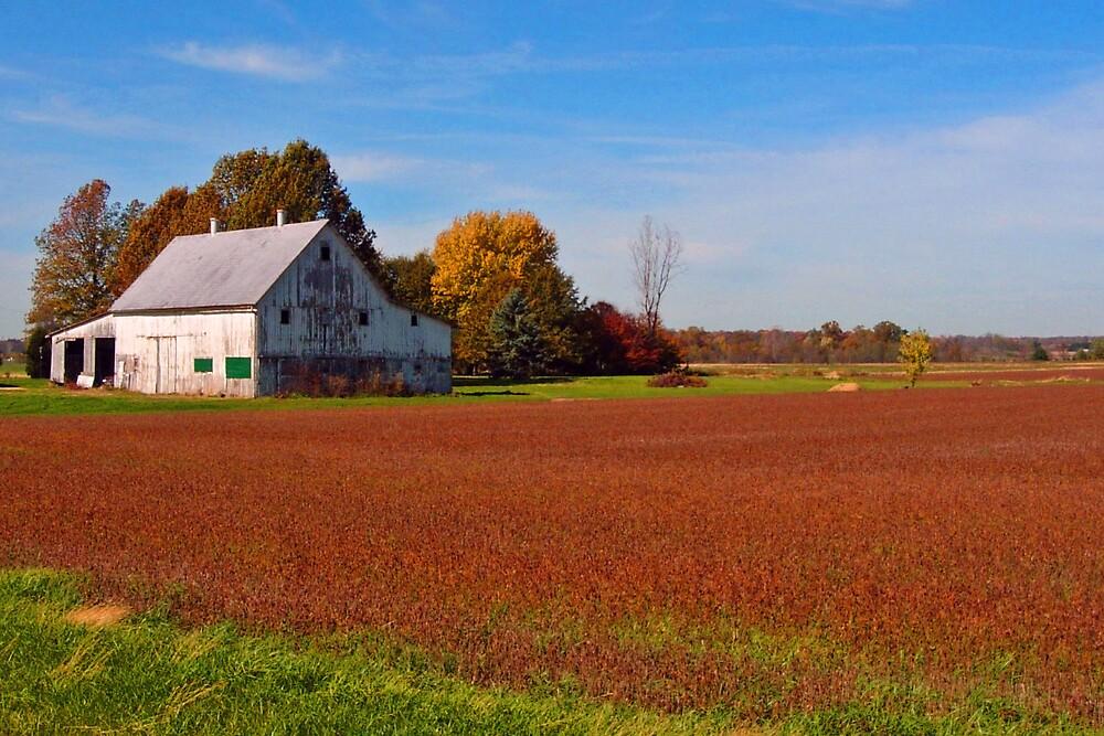 Ohio Farm Land by terrylazar