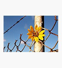Flower Among the Spikes  Photographic Print