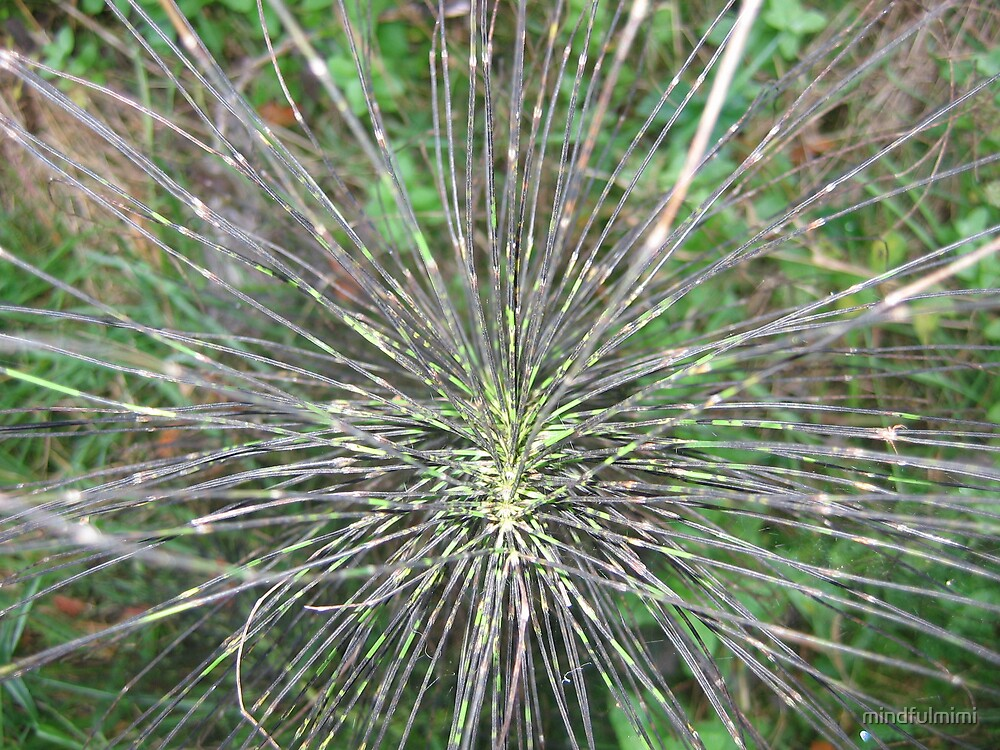 Spiderplant by mindfulmimi