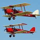 Tiger Moths by Ross Campbell