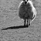 Sheep n Shadow by Yampimon