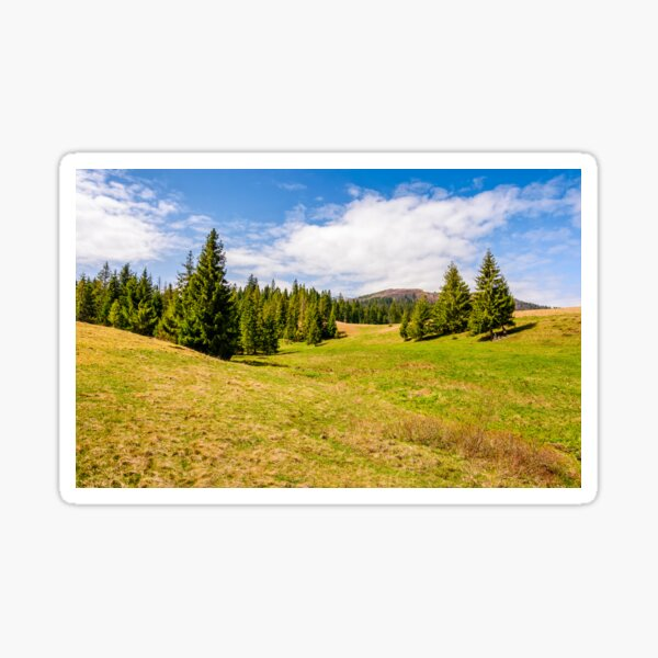 pine forest in summer landscape Sticker