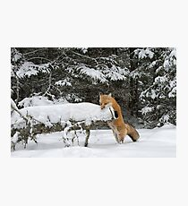 Discovering Snow... Photographic Print