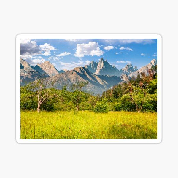 forest on grassy hillside in tatras Sticker