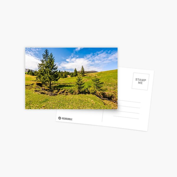 mountain stream among the forest on meadow Postcard