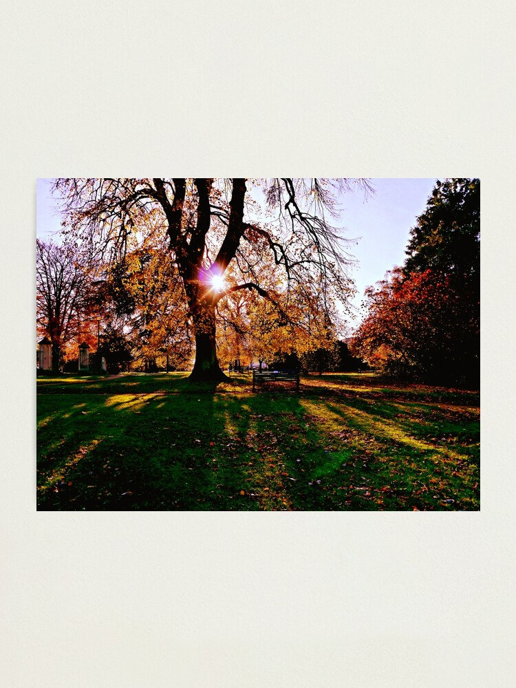 Alternate view of Autumn shadows Photographic Print