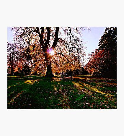 Autumn shadows Photographic Print
