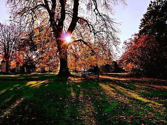 Autumn shadows by ScenicViewPics