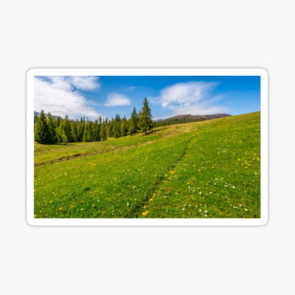 meadow with wildflowers near forest Sticker