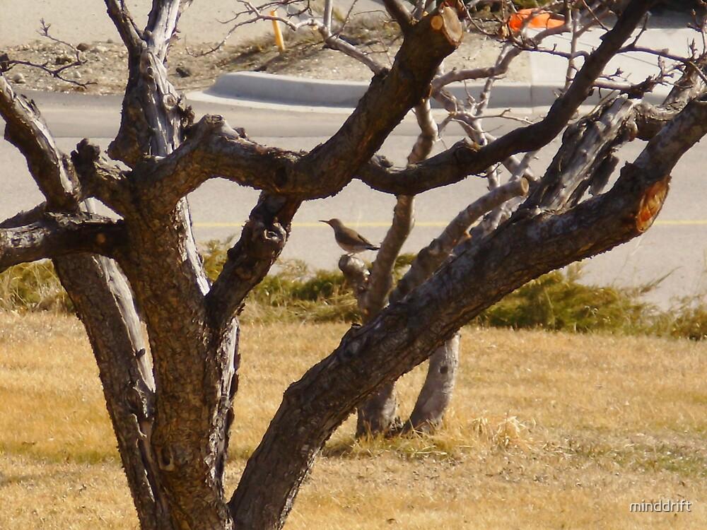 Redbellied Woodpecker on Plum tree. by minddrift