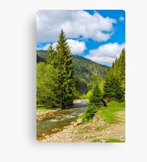 Rapid stream in green forest Canvas Print
