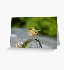 I'm A Daydreamer - Silver-Eye - NZ Greeting Card