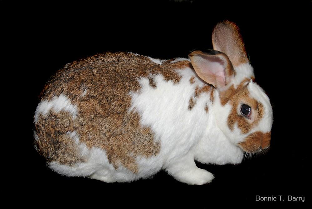 California Giant Bunny by Bonnie T.  Barry