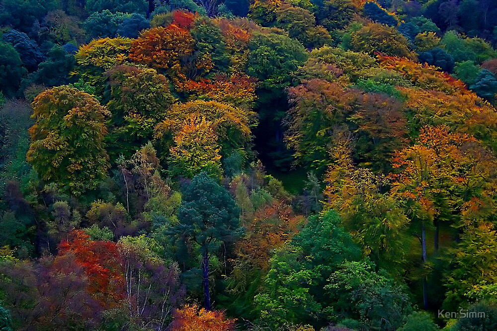 The Woods Autumn Rosslyn chapel by Kenart