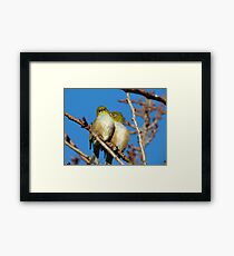 Ahhh!!! A Little More To The Left!!!! - Silver-Eyes - NZ Framed Print