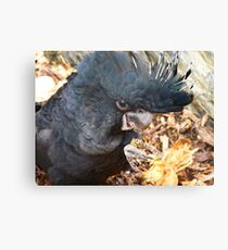 Did You Bring The Preening Equipment? - Black Red Tailed Cockatoo Canvas Print