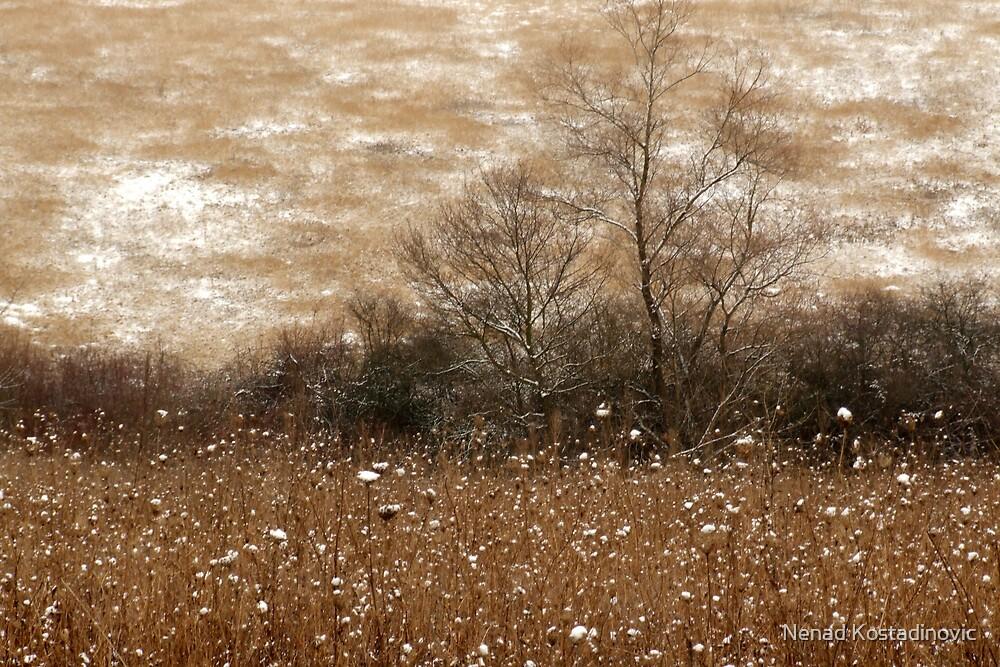 Winter comming by Nenad Kostadinovic