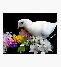 Yipee...I'ts Spring - White Doves - NZ Photographic Print