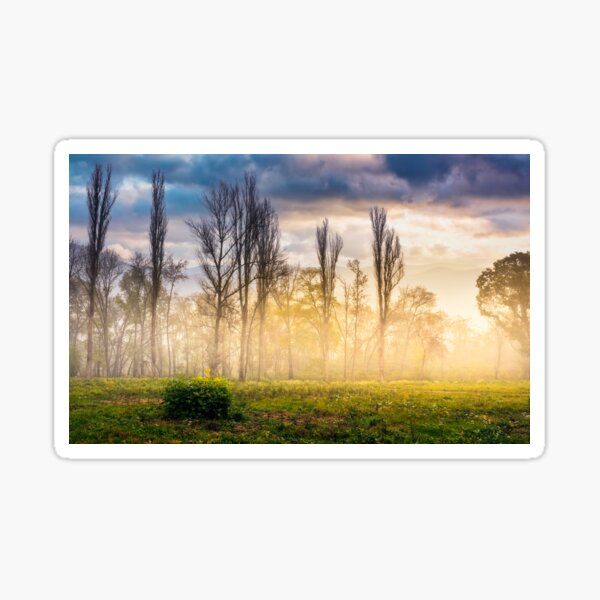 trees on meadow in mountains at foggy sunrise Sticker