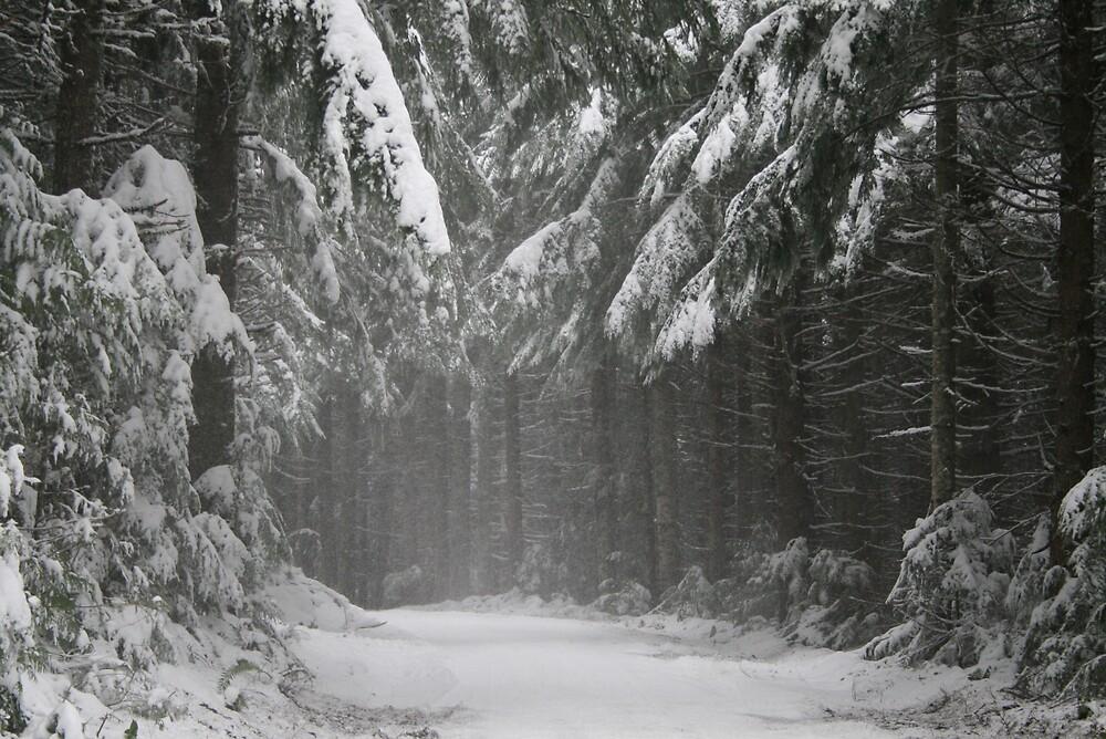 Snow Road by Deby Moehnke