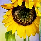 Sunflower retro by lensbaby