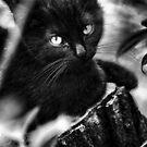 I am Black by Joe Bledsoe