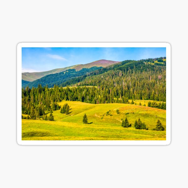 spruce forest in springtime landscape Sticker