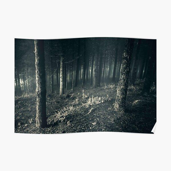 Dark Forest V Poster