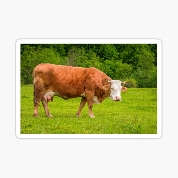 rufous cow on a meadow near the forest Sticker