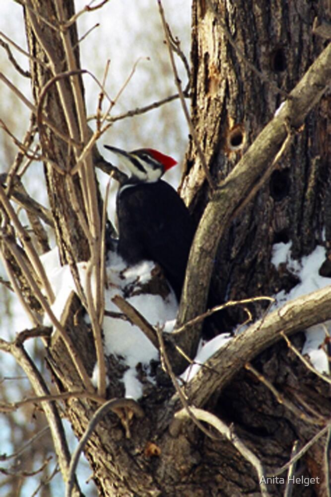 Woody Woodpecker Jr by Anita Helget