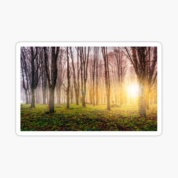 trees on meadow at foggy sunrise Sticker