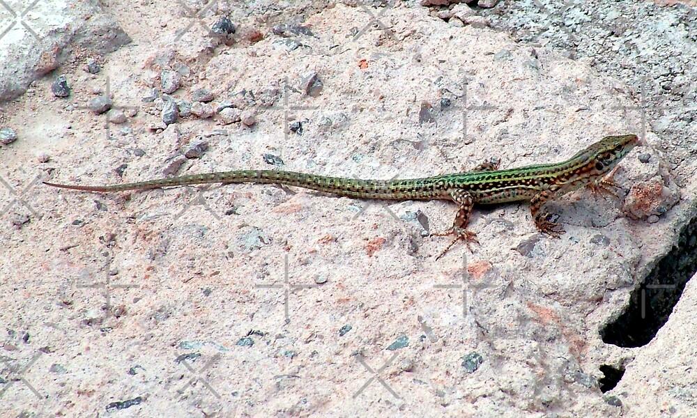 Lizard by Tom Gomez